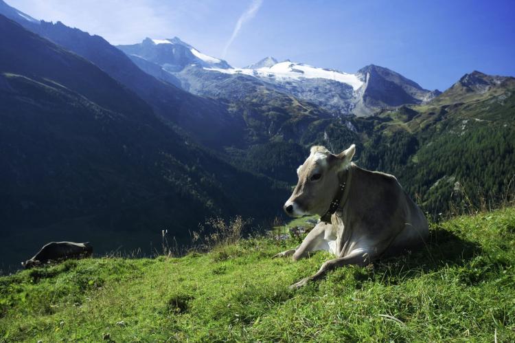 Holiday homeAustria - Tirol: Haas  [18]