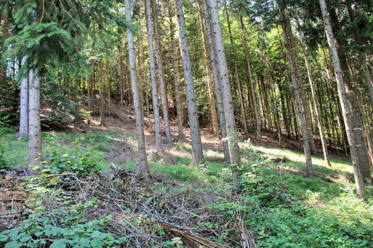 Holiday homeAustria - Carinthia: Biohof Claudia  [26]