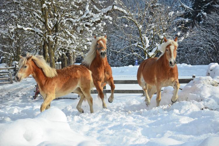 Holiday homeAustria - Tirol: Thumahof  [22]