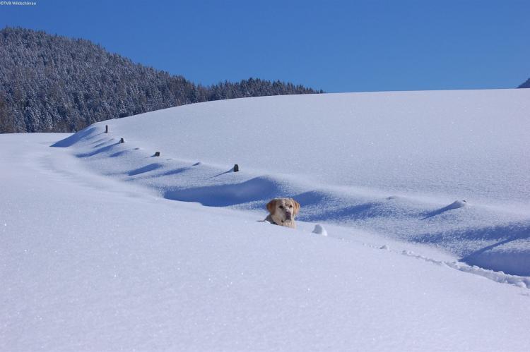 Holiday homeAustria - Tirol: Thumahof  [33]