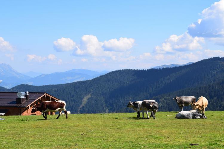 Holiday homeAustria - Tirol: Chalet Wald xxl  [34]