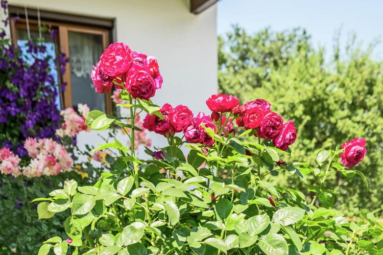 Holiday homeAustria - : Ebster  [29]