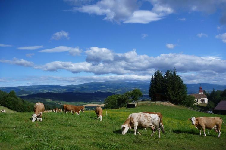 VakantiehuisOostenrijk - Karinthië: Alpina Lodge  [27]