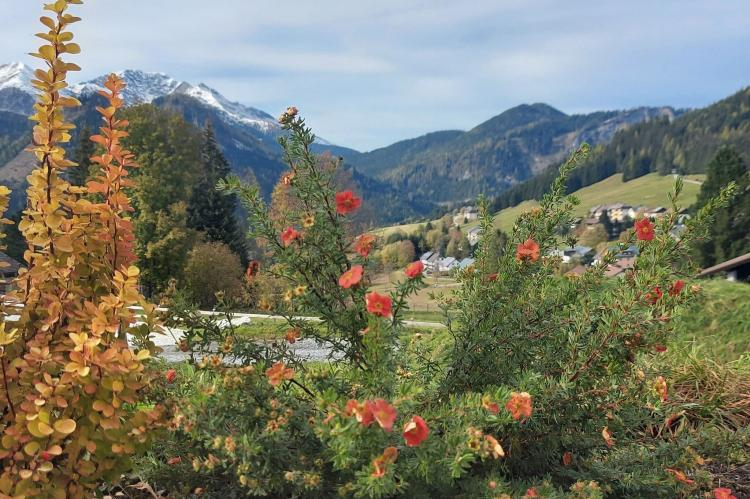 Holiday homeAustria - : Indian Summer  [36]