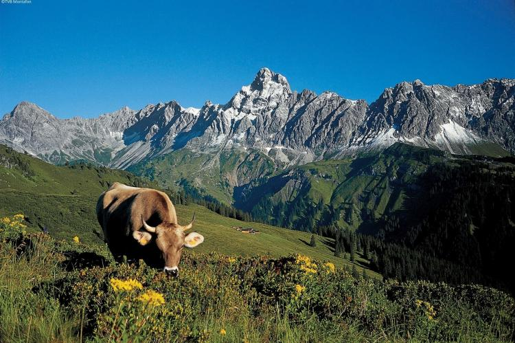 Holiday homeAustria - Vorarlberg: Luxurious Montafon Chalet 2  [24]