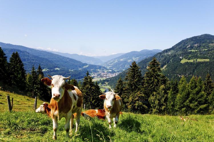 VakantiehuisOostenrijk - Steiermark: Chalet de Bosrand  [37]