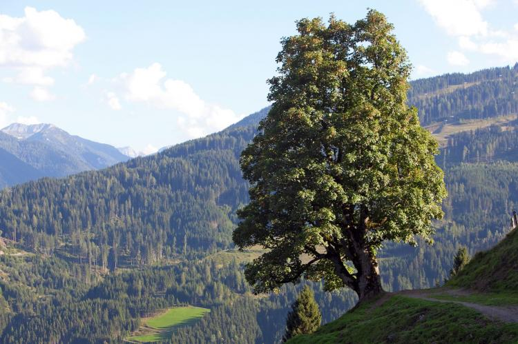 Holiday homeAustria - Salzburg: Mohr  [17]