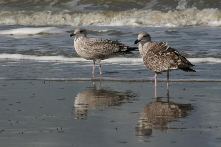 Holiday homeBelgium - West Flanders: Sea Side 45  [33]