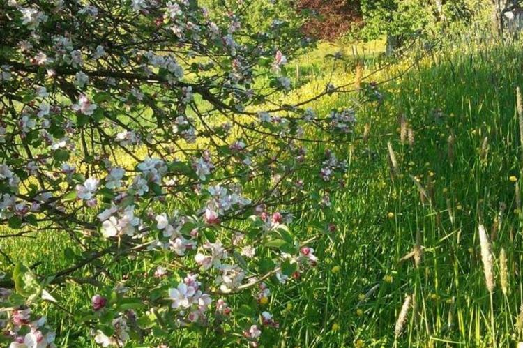 VakantiehuisBelgië - Ardennen, Henegouwen: Le Marteaubois  [28]