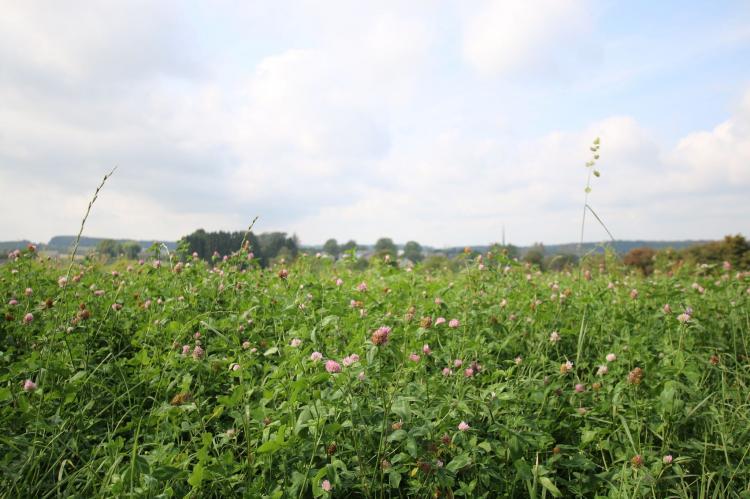 VakantiehuisBelgië - Ardennen, Luxemburg: La Petite Reine  [34]