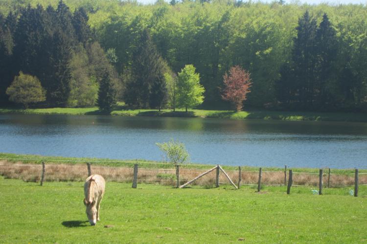 VakantiehuisBelgië - Ardennen, Luxemburg: Bourcy  [36]
