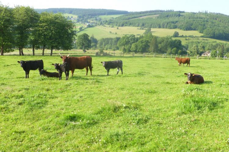 VakantiehuisBelgië - Ardennen, Luxemburg: La Ferme Claudlisse  [34]