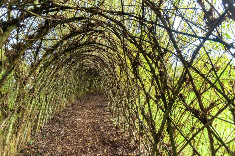 Holiday homeBelgium - Luxembourg: Le Tunnel de Saule  [36]