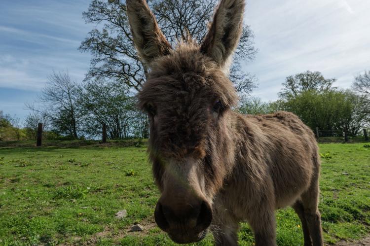 VakantiehuisBelgië - Ardennen, Luxemburg: Le Refuge de Césyl  [25]