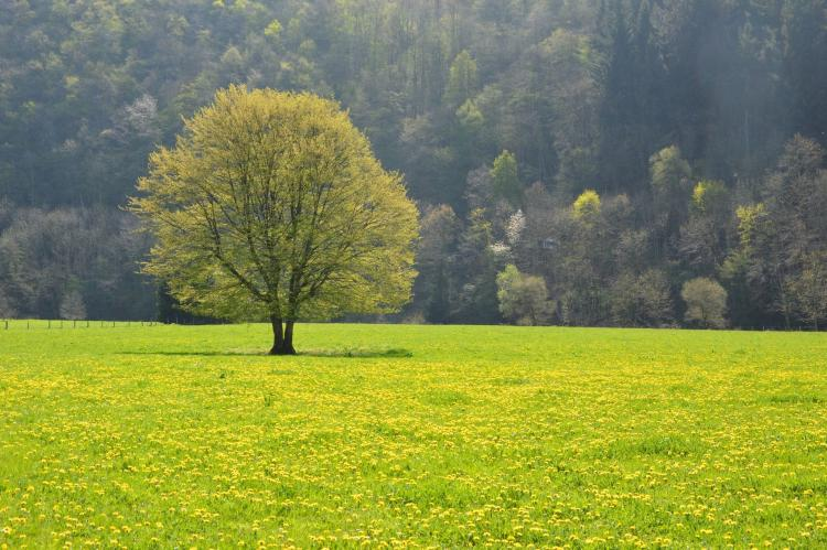 VakantiehuisBelgië - Ardennen, Luxemburg: Le Tilleul  [26]