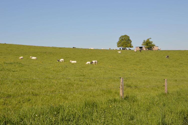 VakantiehuisBelgië - Ardennen, Luxemburg: Le Mirador  [27]