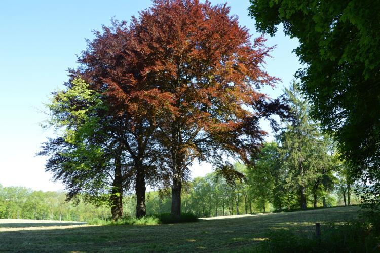 Holiday homeBelgium - Luxembourg: Borlonette  [28]