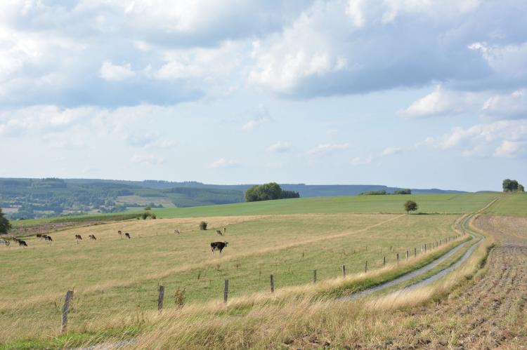 VakantiehuisBelgië - Ardennen, Luxemburg: Le vieil érable  [26]