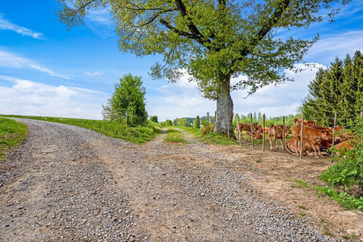 Holiday homeBelgium - Luxembourg: Les Bisons de l'Eden  [35]