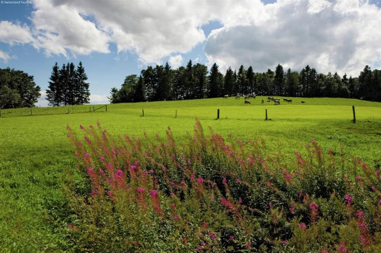 Holiday homeSwitzerland - Wallis/Valais: Residence Edelweiss  [22]