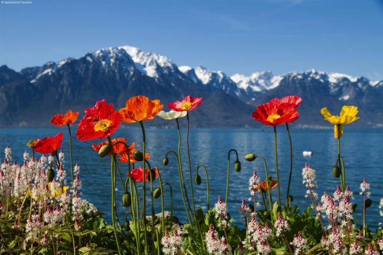 Holiday homeSwitzerland - Wallis/Valais: Residence Edelweiss  [20]