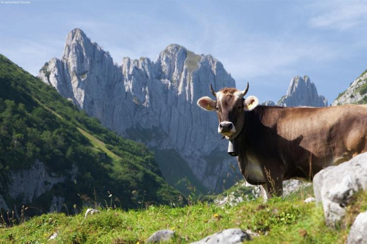 Holiday homeSwitzerland - Wallis/Valais: Residence Edelweiss  [23]