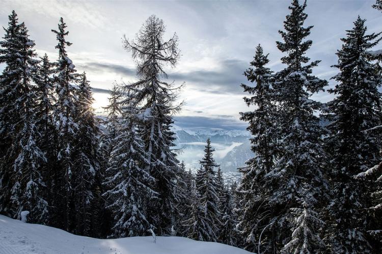 VakantiehuisZwitserland - Wallis/Valais: Saflischgarten  [22]