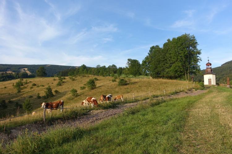 Holiday homeCzech Republic - North Bohemia/Giant Mountains: Rokytno  [17]