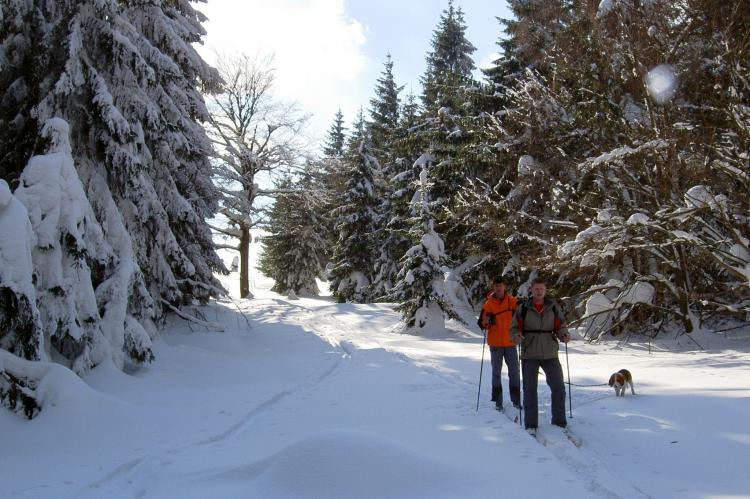 Holiday homeCzech Republic - East Bohemia: Koruna  [38]