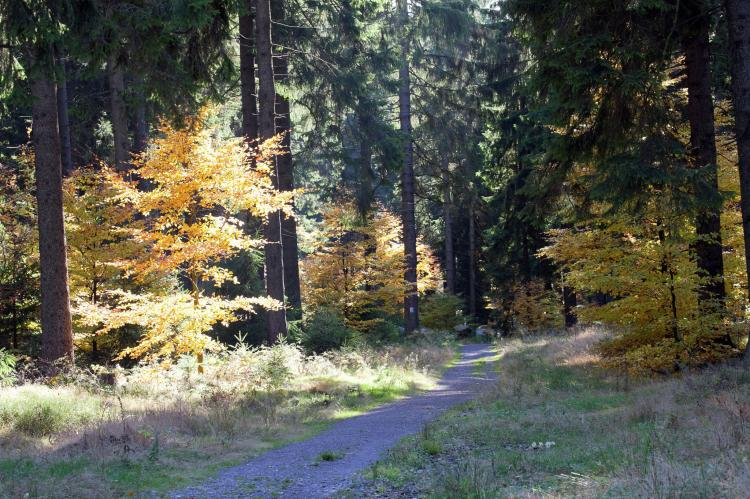 Holiday homeGermany - Thuringia: Waldblick  [30]