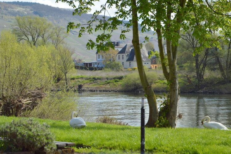 Holiday homeGermany - Rhineland-Palatinate: Zum Weissen Rössel  [32]