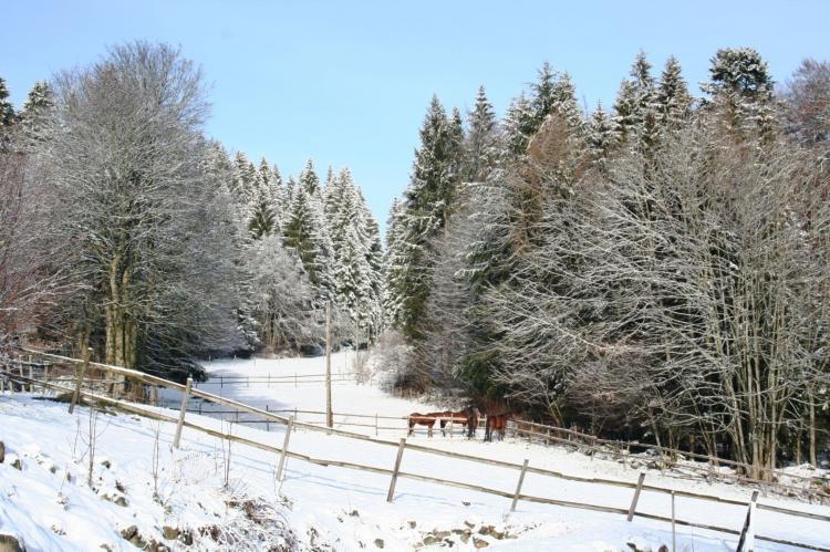 VakantiehuisDuitsland - Zwarte woud: Pferdeklause  [25]