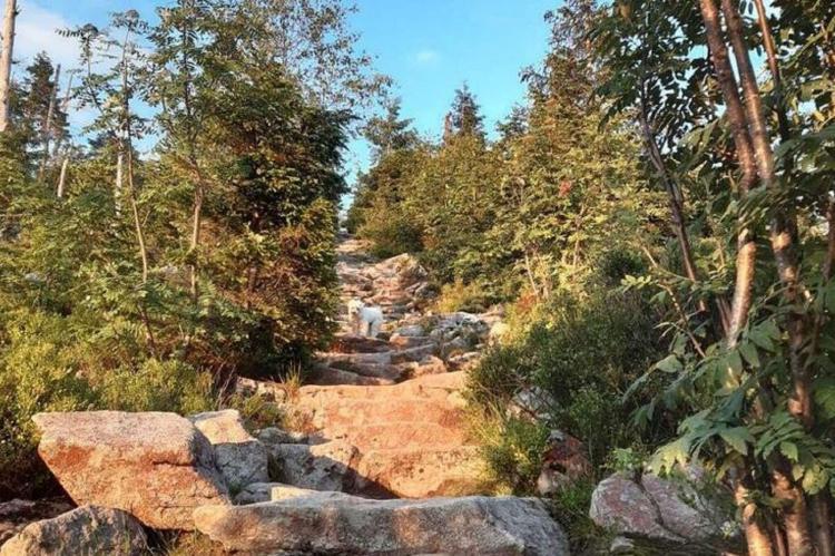 Holiday homeGermany - Bavaria: Im Bayerischen Wald  [16]