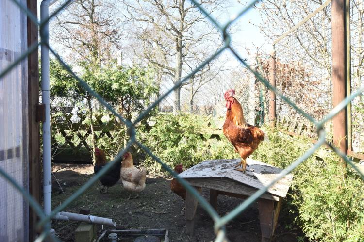 Holiday homeGermany - Mecklenburg-Pomerania: Ferienwohnung Möwe - viele Kinder-Extras strandnah  [31]