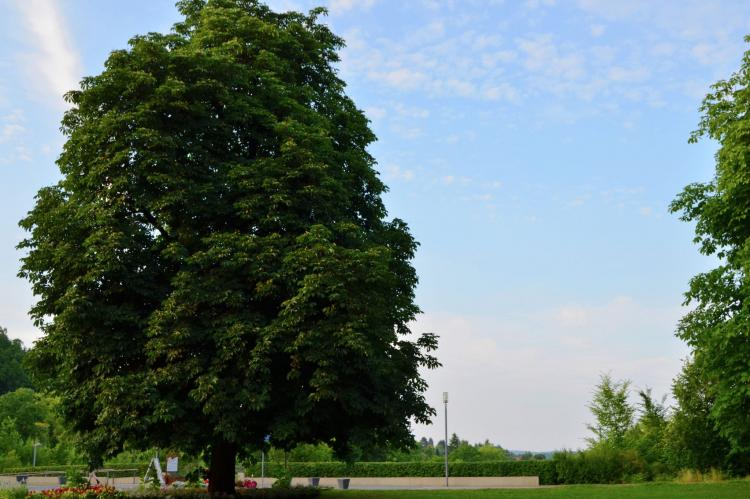 VakantiehuisDuitsland - Hessen: Am Ferienbauernhof - FW 1 und 5  [29]