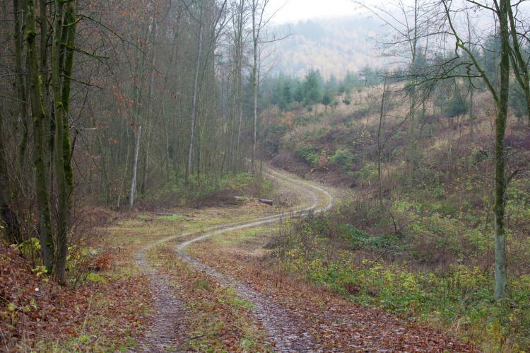 Holiday homeGermany - Harz: Moni  [11]