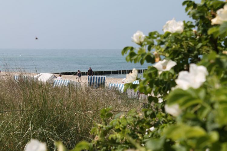 Holiday homeGermany - Mecklenburg-Pomerania: Wiesenblick  [20]