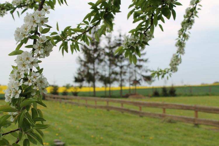 Holiday homeGermany - Mecklenburg-Pomerania: Hohenkirchen mit Garten Terrasse und Strandkorb  [27]