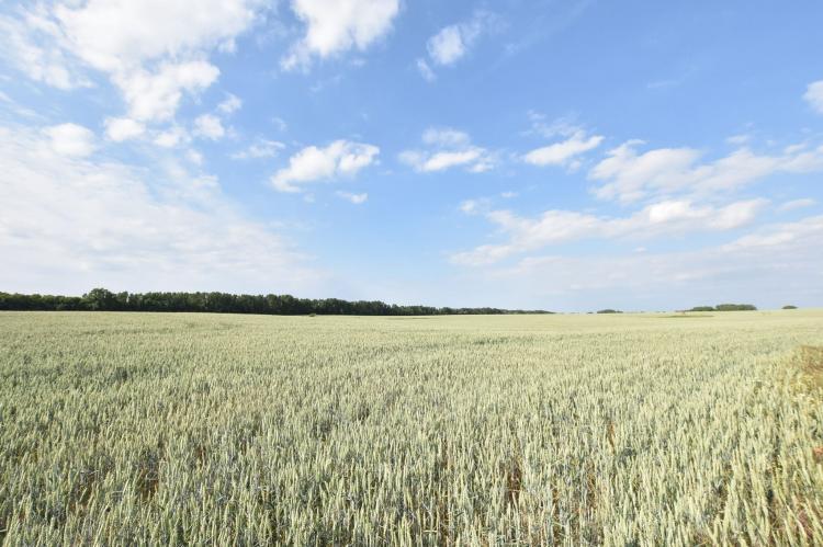 Holiday homeGermany - Mecklenburg-Pomerania: Ostseeurlaub mit Terrasse  [25]
