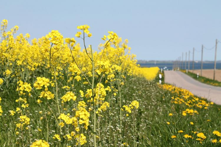 Holiday homeGermany - Mecklenburg-Pomerania: Ostseeurlaub mit Terrasse  [21]