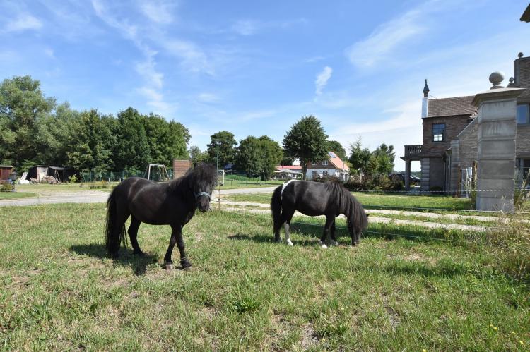 Holiday homeGermany - Mecklenburg-Pomerania: Landgut Detershagen - Wohnung I im EG  [20]