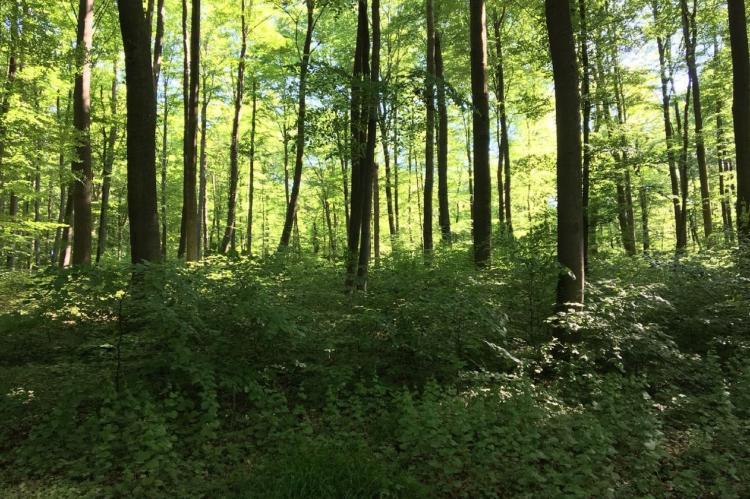 Holiday homeGermany - Hesse: Wanderfreund  [20]