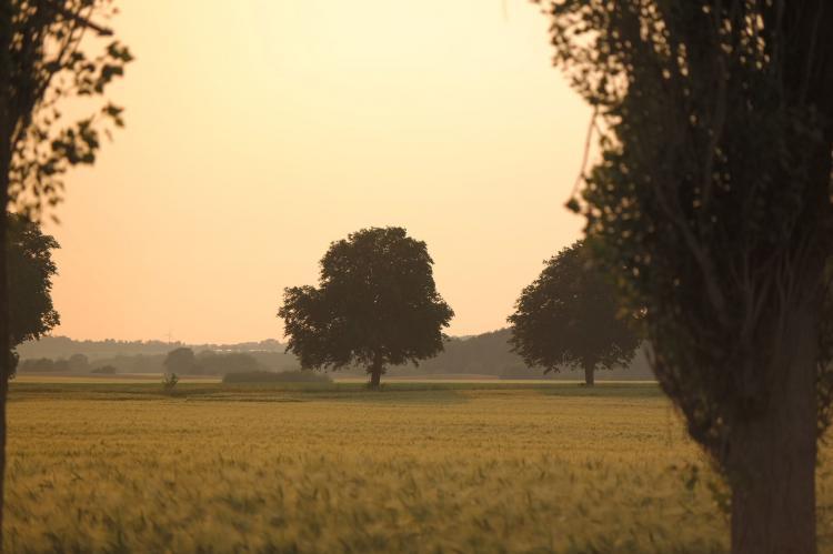 VakantiehuisDuitsland - Mecklenburg-Vorpommern: Familienurlaub im Grünen 4  [30]