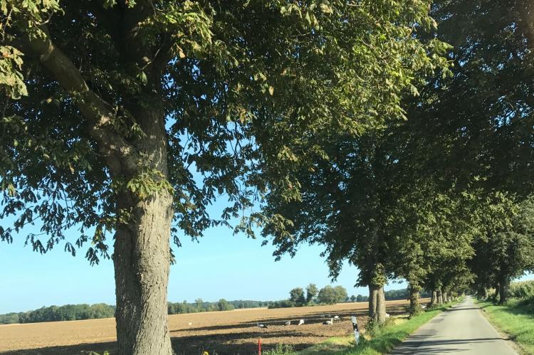 VakantiehuisDuitsland - Mecklenburg-Vorpommern: Familienurlaub im Grünen 4  [11]