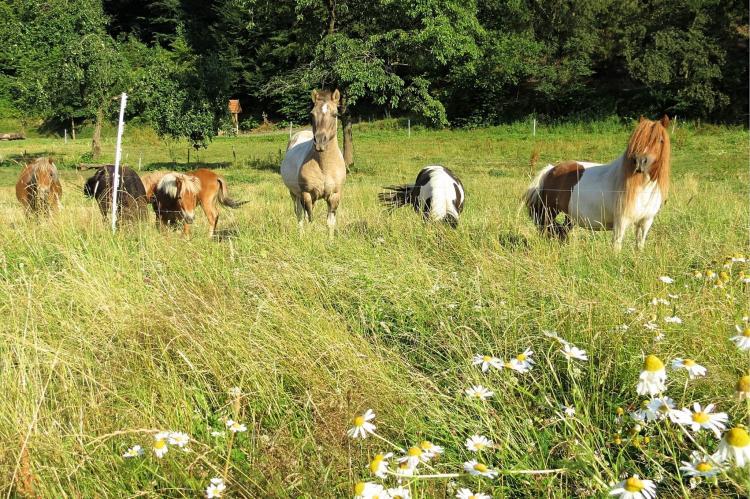 Holiday homeGermany - Hesse: Am Ferienbauernhof - FW 6 und 7  [28]