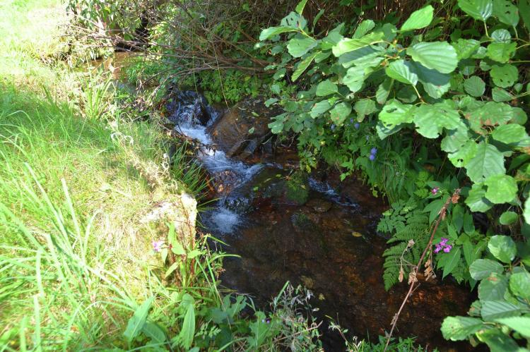 VakantiehuisDuitsland - Zwarte woud: Fahrner  [18]