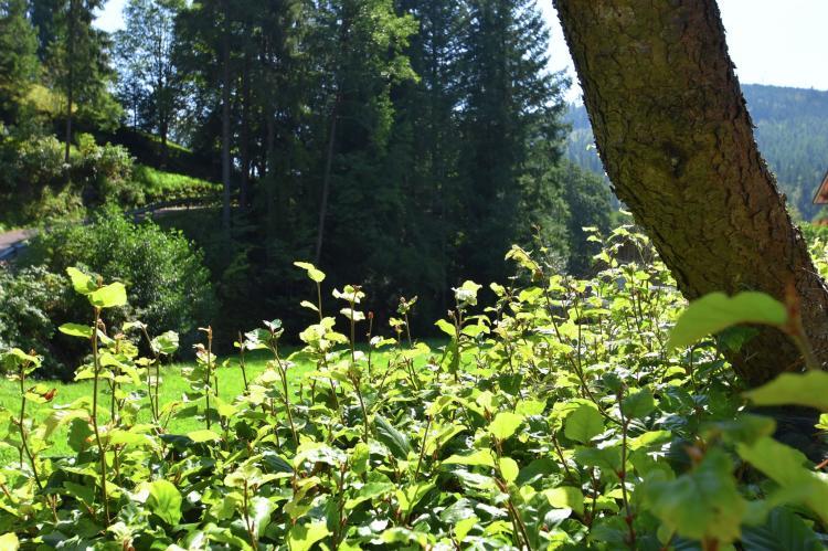 VakantiehuisDuitsland - Zwarte woud: Fahrner  [15]