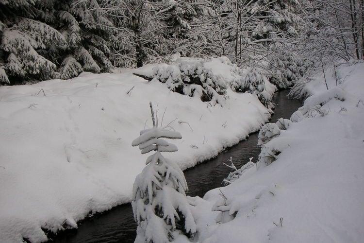 Holiday homeGermany - Harz: Ferienpark am Waldsee 1 - Haustierfrei  [40]