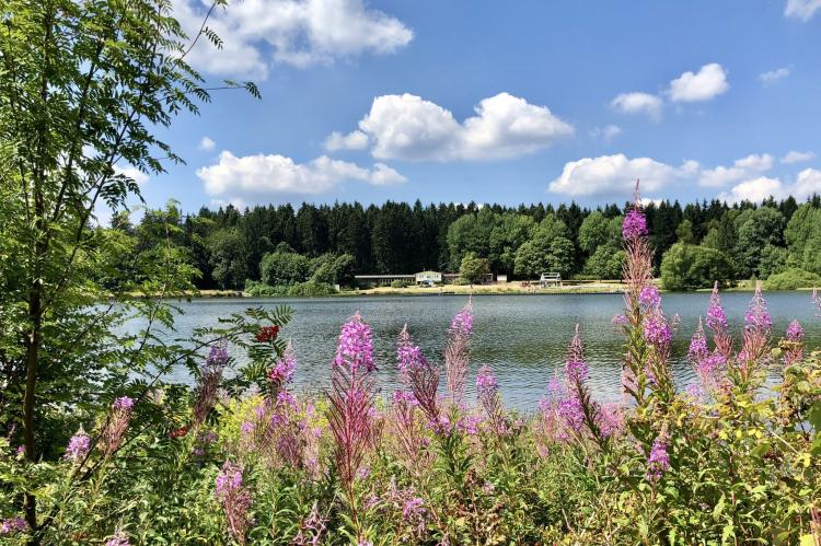 Holiday homeGermany - Harz: Ferienpark am Waldsee 1 - Haustierfrei  [34]