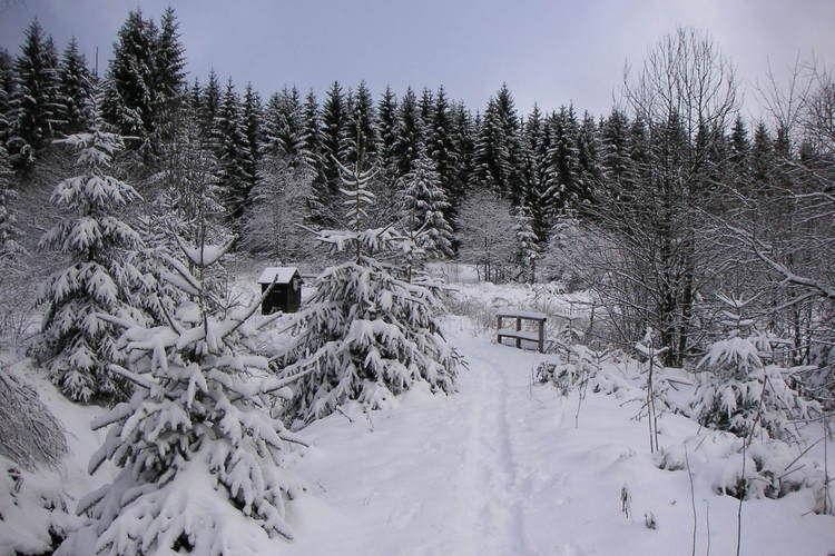 Holiday homeGermany - Harz: Ferienpark am Waldsee 1 - Haustierfrei  [38]